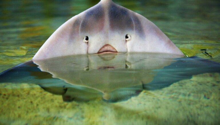 ФОТО. Город скатов – место, где можно погладить и даже покормить с рук опасных морских хищников