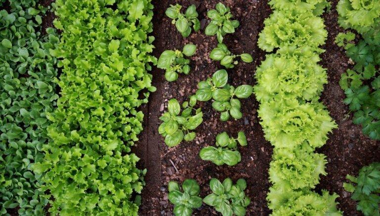 Июль в саду: Что еще не поздно посадить