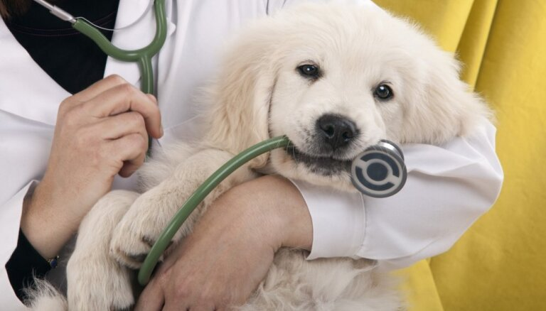 Чип — до четырех месяцев: в Латвии ужесточены правила содержания собак