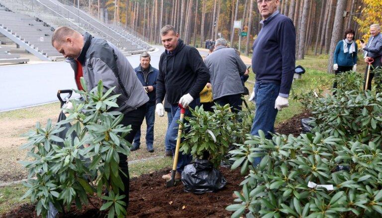 Foto: Mežaparkā tapis iespaidīgs rododendru dārzs – iestādīti vairāk nekā 120 augi