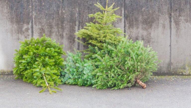 Padomi, ko pēc svētkiem iesākt ar Ziemassvētku eglīti