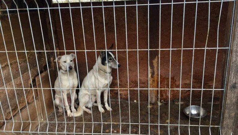 No 'Haskiju parka' Ventspils novadā PVD izņem 26 suņus