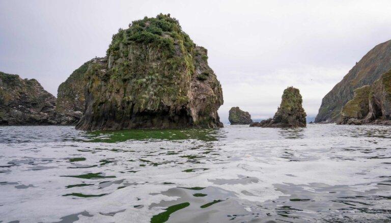 Kamčatkā mīklainajā ekonelaimē miruši 95% grunts iemītnieku