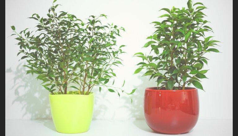 Фикус, бегония, кактусы: Что о вас могут рассказать ваши любимые растения
