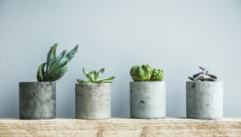 'Radām novadam': Priekules novadā ražos lieto betona bruģi un mēbeles