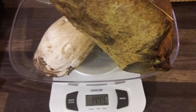 Foto: Talsu novadā atrod pusotru kilogramu smagu baraviku