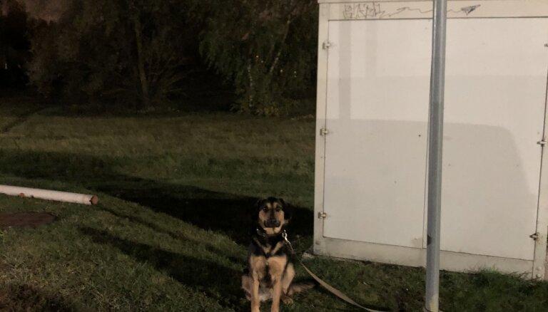 В Риге возле магазина брошен щенок: ищут хозяина или свидетелей ситуации