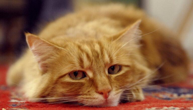 От миски до постели и обратно: 5 признаков, что вашей кошке скучно