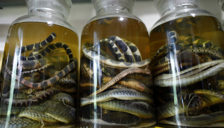 В желудке змеи обнаружена неизвестная науке рептилия
