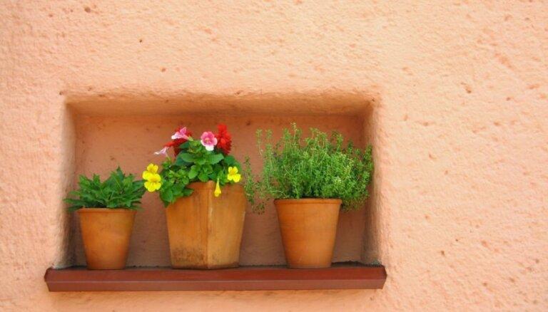 Deviņi istabas augi, kas pacieš nevērību