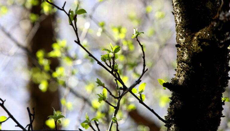 Садовые премудрости: сколько надо воды и удобрений на каждое дерево