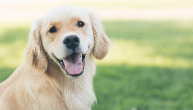 Grūti nepiekrist: kāpēc suns ir uzticamāks nekā cilvēks