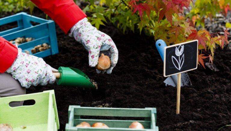 Kas darāms dārzā un pagalmā līdz 8. oktobrim
