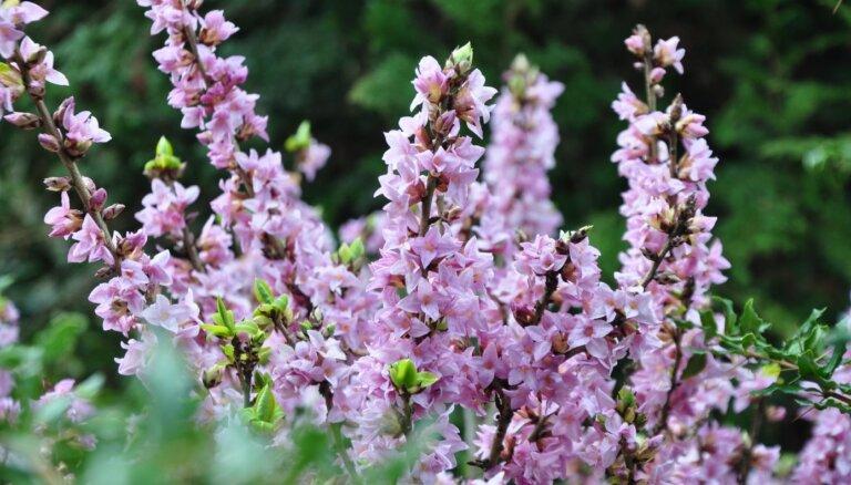 ФОТО. Как выглядит весна в Национальном ботаническом саду в Саласпилсе