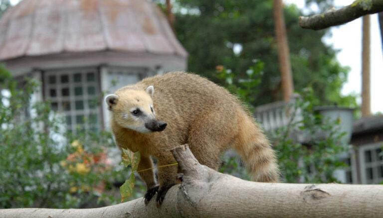 Muzeju naktī Rīgas zoodārzā varēs vērot, kā zvēri uzvedas krēslas stundās