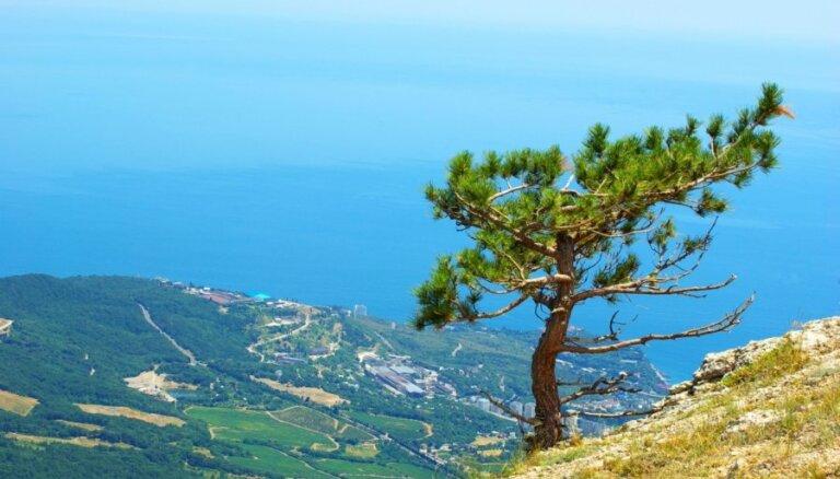 Жестокая засуха в Крыму: потеряна половина урожая из-за отсутствия воды из Днепра