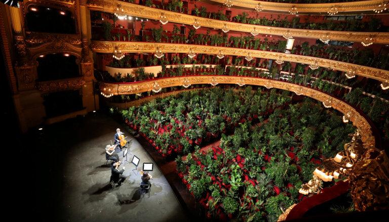 ФОТО, ВИДЕО: Зрители в горшках. В Барселоне сыграли Пуччини для комнатных растений