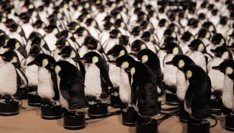 Video: Sociālo tīklu lietotājus sajūsmina pingvīni mākslas instalācijā
