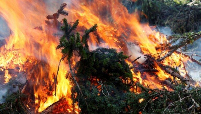 Пенсионер нечаянно сжег лес и заплатит за это 16 000 евро