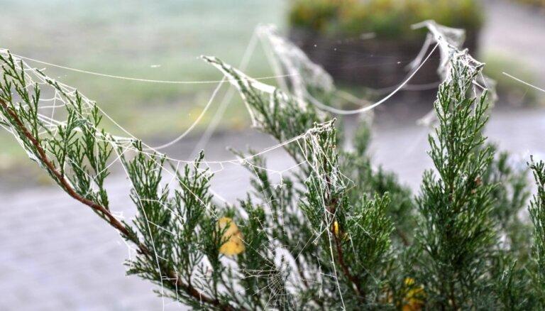 Pēdējie darāmie rudens dārza darbi un padomu ābece augu ieziemošanai