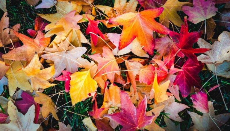 Siltā sega puķudobēm – kur un kā izklāt rudens lapas