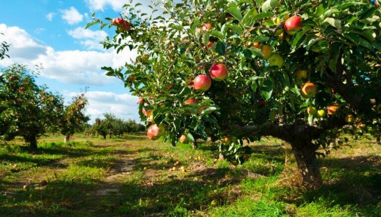 Uldis Jaunzems: Pēc mēneša augļu un dārzeņu tirgotāju nozare var bankrotēt