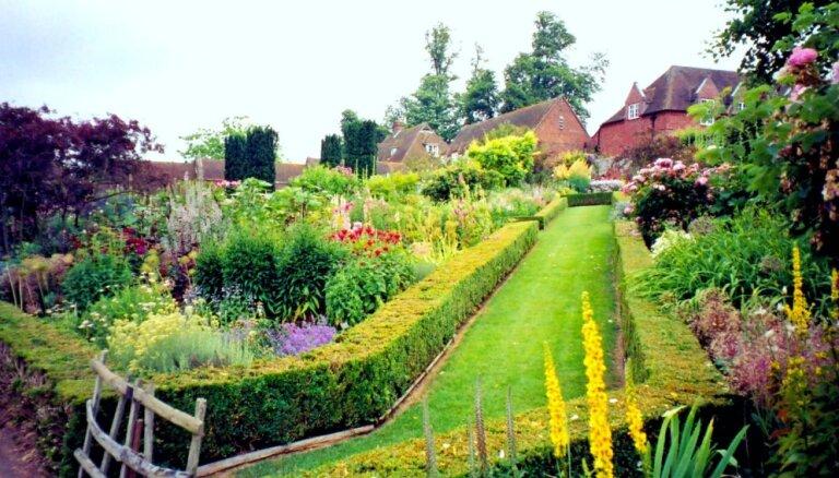 Zaļā pagalma siena - dzīvžogs