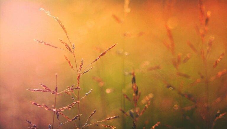 Saules dienu kalendārs: kam veltīt katru dienu?