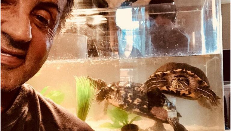 Bruņurupuči, kas piedalījās filmā 'Rokijs', svin savu 45. dzimšanas dienu