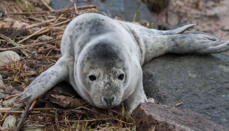 Впереди – нашествие тюленят на пляжи. Что НЕ НУЖНО делать