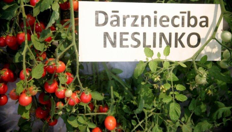 Fotoreportāža: Dabas muzejā gozējas vairāk nekā 200 tomātu šķirnes