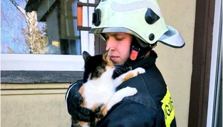 Glābēji atbrīvo loga vērtnē iesprūdušu kaķi; vēdināšanas režīmā tas var būt bīstams