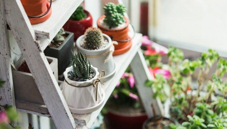 Пять секретов ухода за комнатными растениями