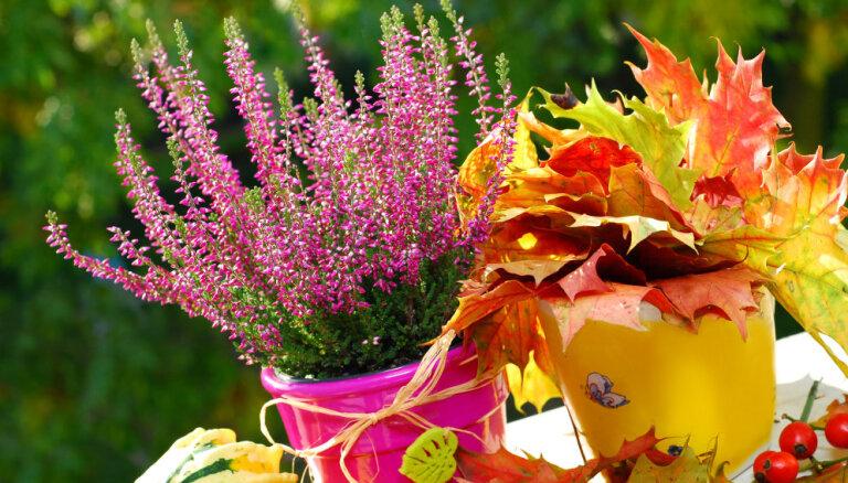 Как правильно посеять цветы под зиму?