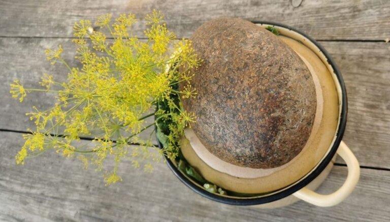 Kāpēc uz sālītiem gurķiem liek akmeni un citi akmens piedzīvojumi virtuvē