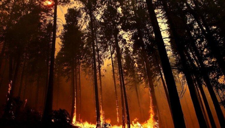 Под Кандавой продолжает полыхать лес: пожарные залили территорию водой