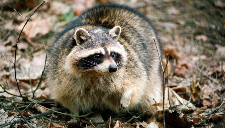 Invazīvo sugu mīļdzīvnieki ir apdraudējums dabas daudzveidībai