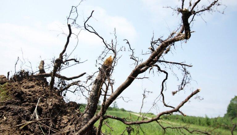 Спасатели выезжали на пять вызовов из-за разрушений от сильного ветра