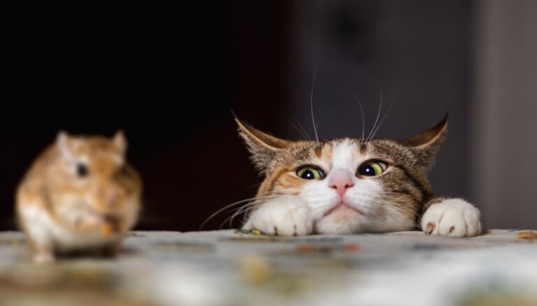 Как избавиться от мышей в дачном домике