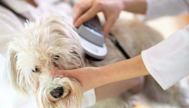 Dzīvniekus arī turpmāk čipēs tikai veterinārārsti; cenas par pakalpojumu ir atšķirīgas