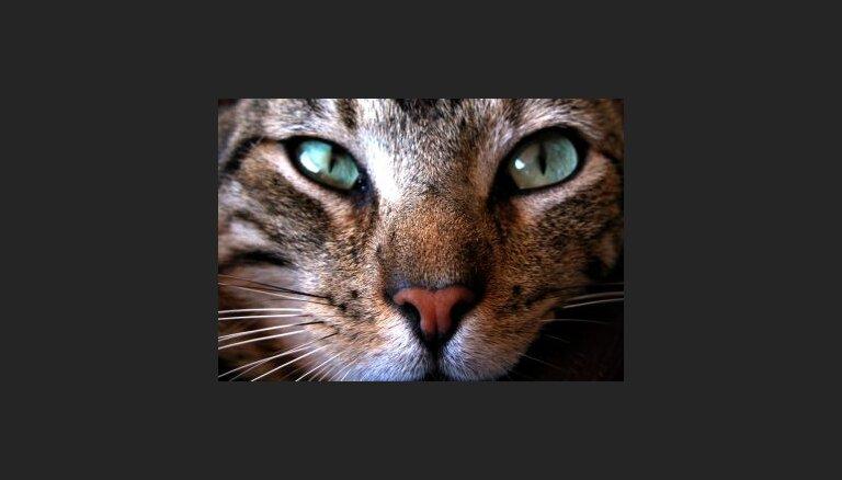 Atzīmes un tituli kaķiem