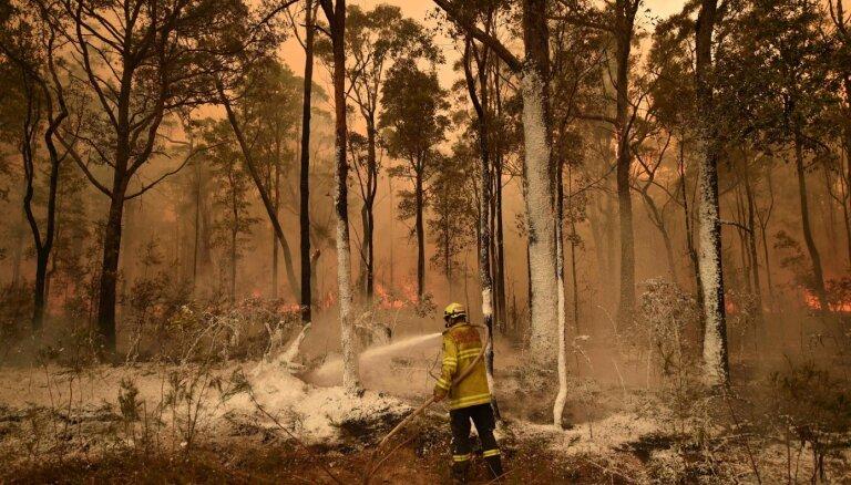 Облако дыма и пепла из Австралии отправилось гулять по всему миру. Чем это грозит?