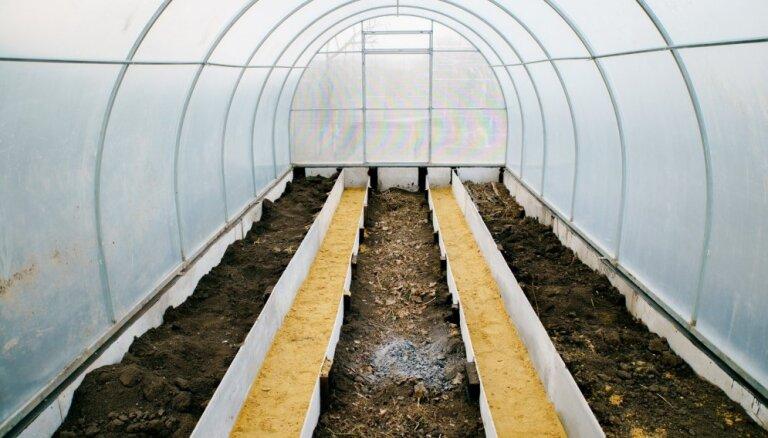 Rudenī ieteicamākais zaļmēslojuma augs siltumnīcās – rudzi