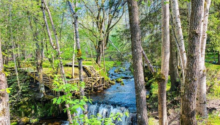 Foto: Pavasara burvības ieskautā Ieriķu dzirnavu dabas taka