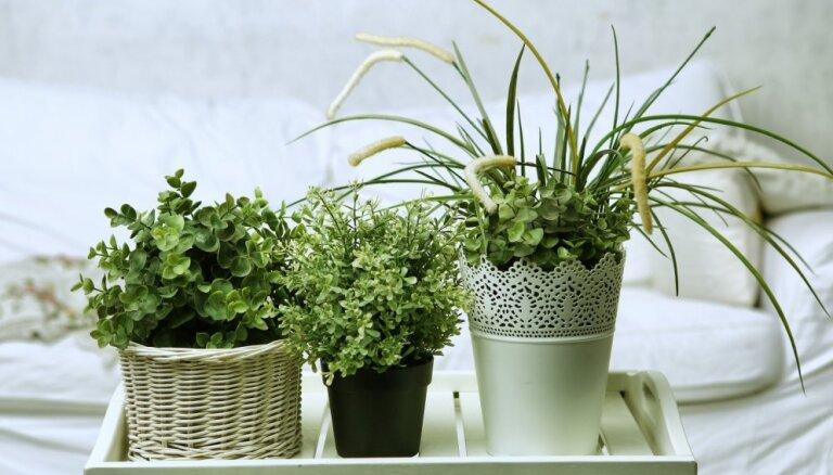 Готовим комнатные растения к зиме: 8 вещей, которые нужно сделать