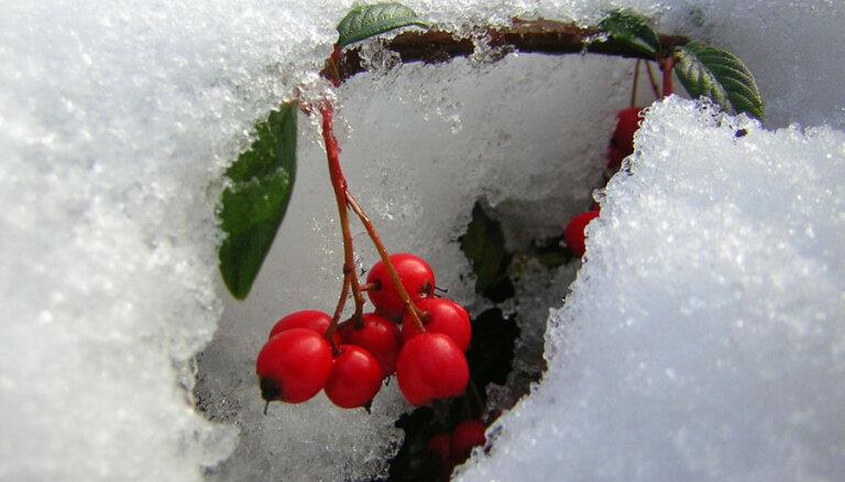 Janvārī portāls 'Cālis' iepazīstinās ar audžuģimeņu pieredzes stāstiem