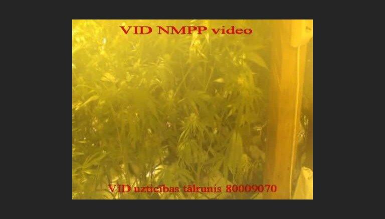 VID atklāj marihuānas audzētavu Pierīgā