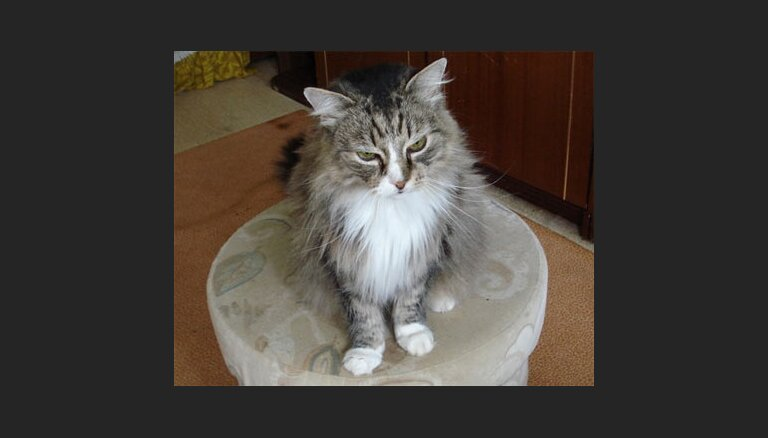 Dzīvnieku SOS aicina palīdzēt kaķiem, kas palikuši bez saimnieces