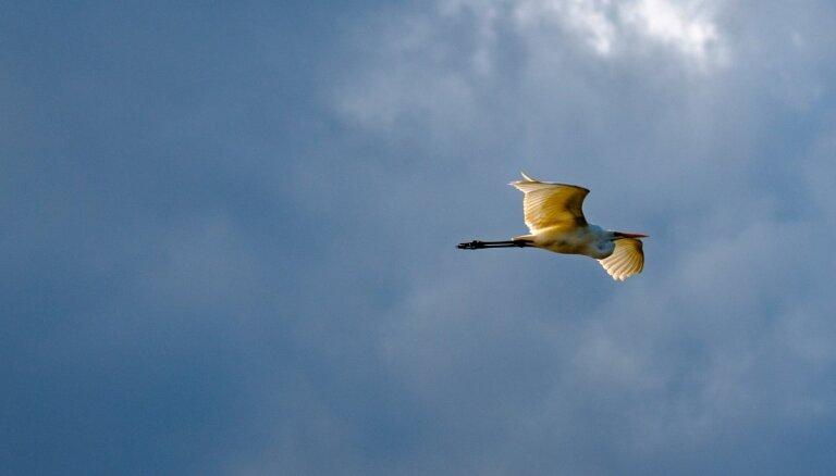 Interesenti aicināti piedalīties putnu fotogrāfiju konkursā