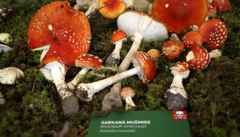 ФОТО. В Музее природы проходят традиционные дни грибов